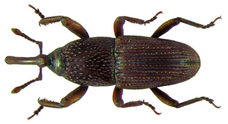 Особенности насекомого
