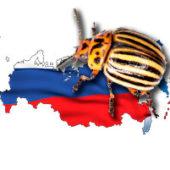 Откуда колорадский жук появился на территории России?
