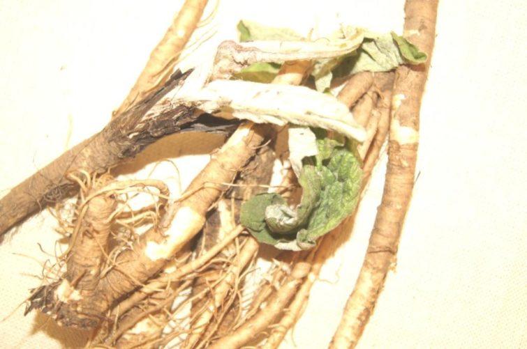 Лопушиные корни