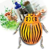 Как эффективно бороться с колорадским жуком народными средствами