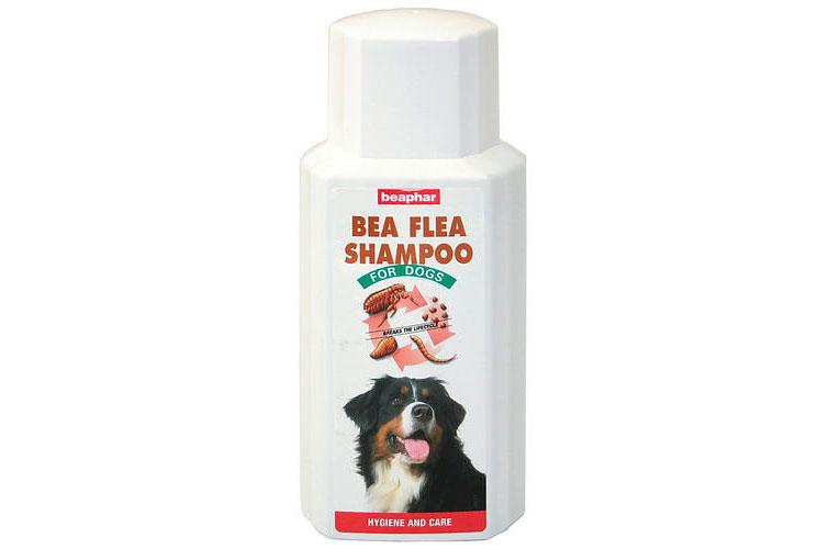 Bea Flea