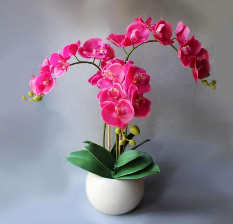 Орхидея домашняя