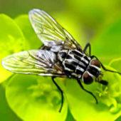Как избавиться от цветочных мух в горшках?