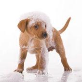 Шампунь от блох для собак - как выбрать лучшее средство