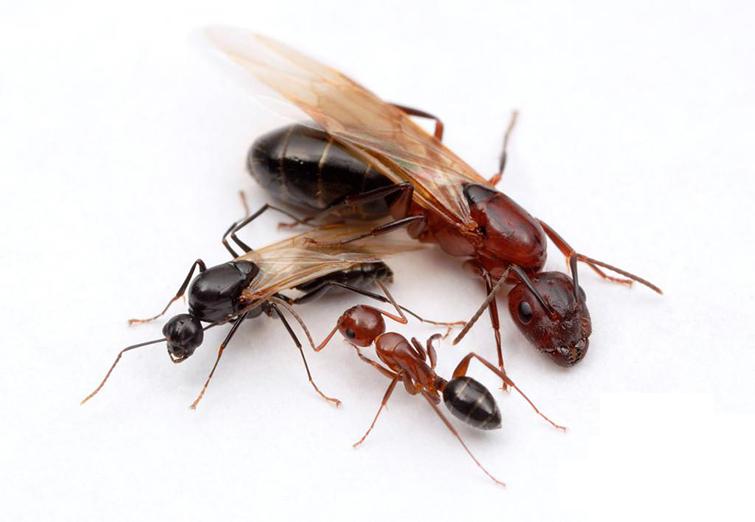 Особенности жизненного цикла муравьев в зимний период