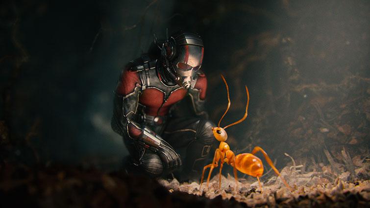 Чел муравей и муравей