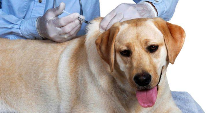 Где и когда делать прививку собаке