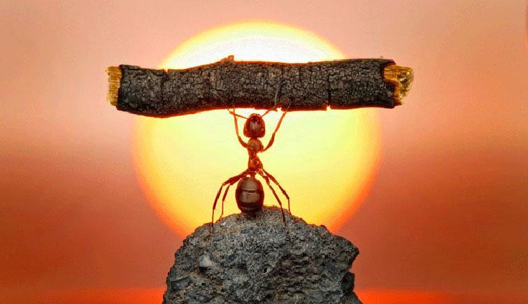 Руки-Базуки у муравья