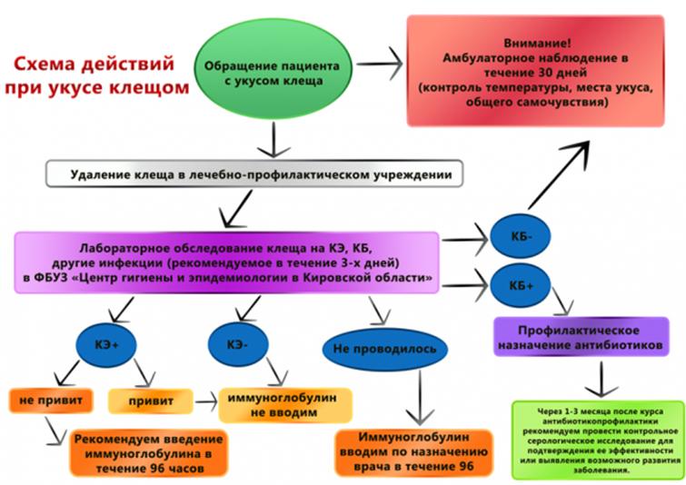 Схема применения и дозировка
