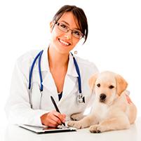 Прививка от клещей для собак. Отзывы о вакцине от клещевого энцефалита для собак