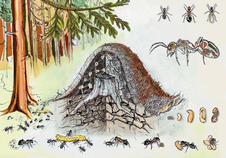 Как устроен муравейник для зимовки