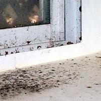 Как убрать грибок на пластиковых окнах?