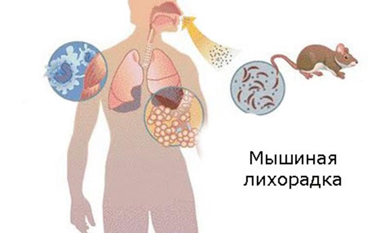 Течение болезни и ее первые признаки