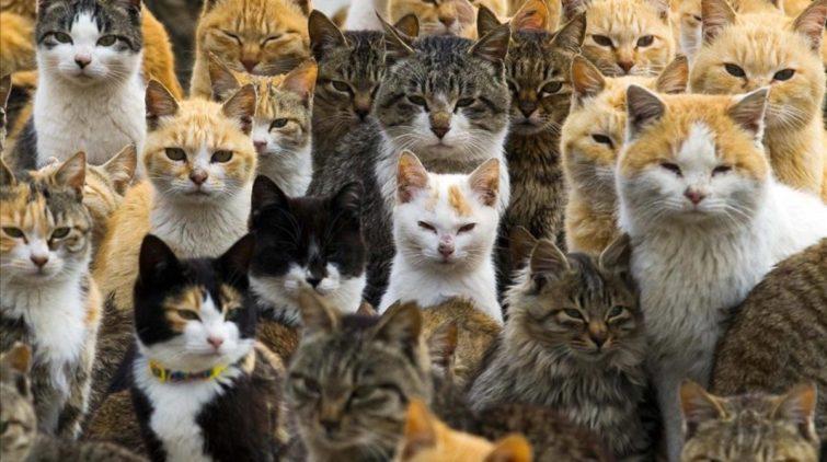 Как сделать отпугиватель кошек своими руками