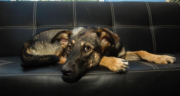 Как УЗ воздействует на собак