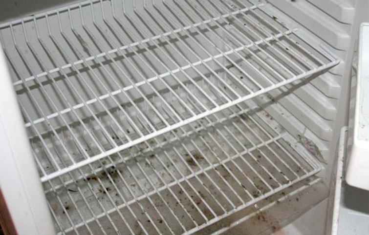 Причины появления плесени в холодильнике