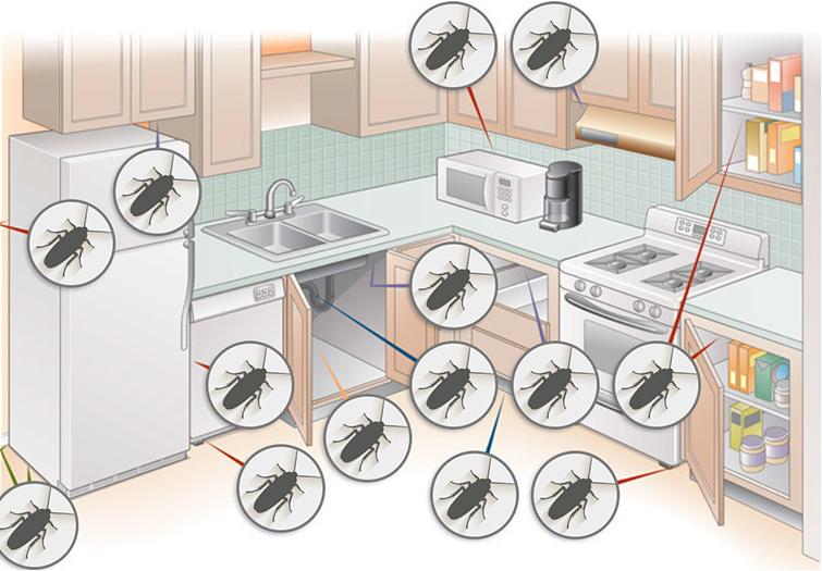 Места обитания тараканов на кухне