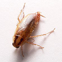 Как избавиться от тараканов в комнате общежития
