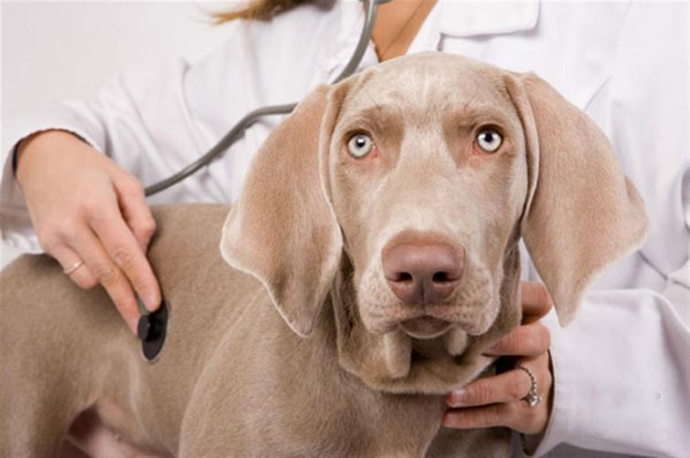 Какой вред клещи могут нанести здоровью собаки