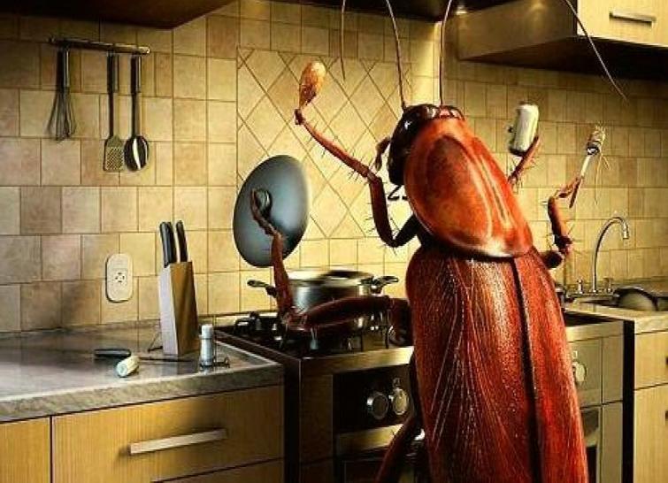 Как бороться с тараканами на кухне