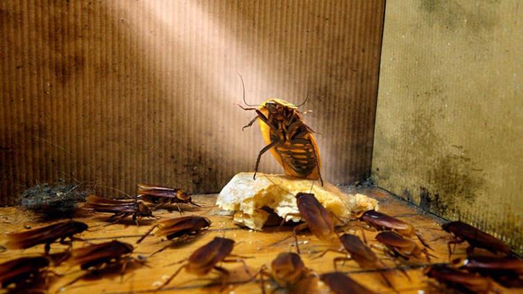 Признаки проникновения тараканов в жилище