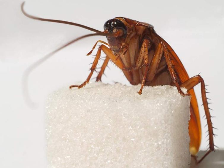 На кухне завелись тараканы