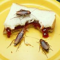 Чем лучше выводить тараканов