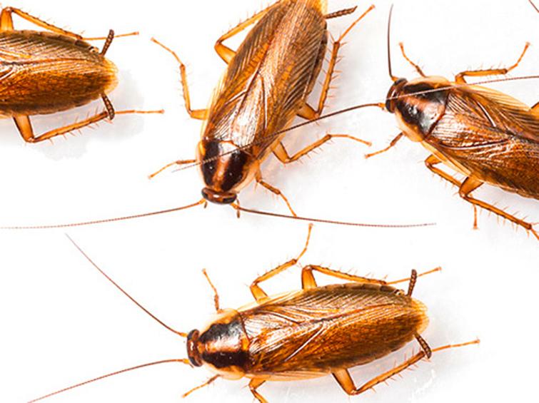 Как вывести тараканов из микроволновки