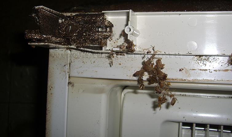 Задняя панель холодильника в котором обитают тараканы