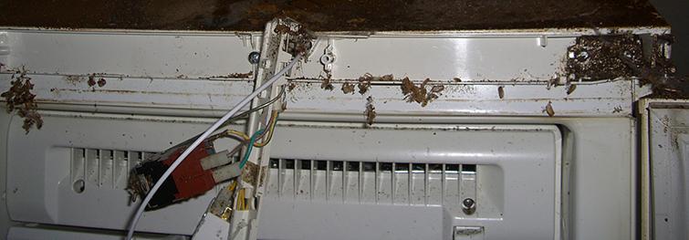 Панель управления холодильника, место жительства тараканов