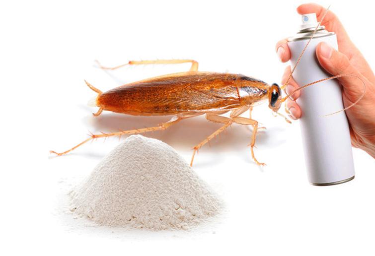 Лучшие средства для уничтожения тараканов в квартире