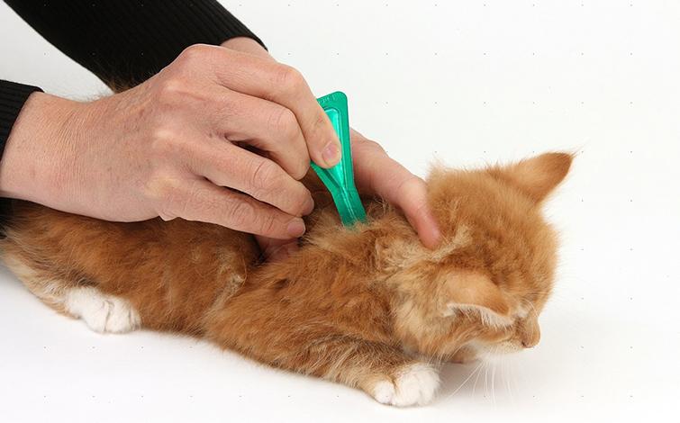 Инструкция по применению капель от блох для домашних животных
