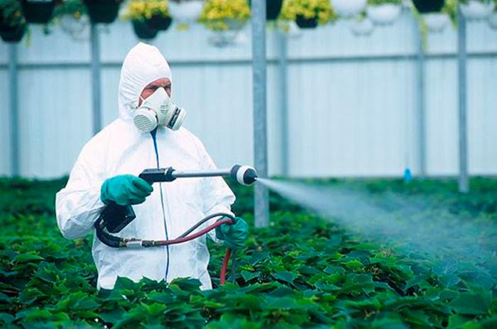 Обработка растений фунгицидами