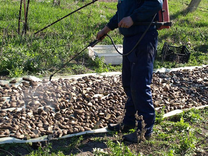 Чем обработать картофель от колорадского жука препараты