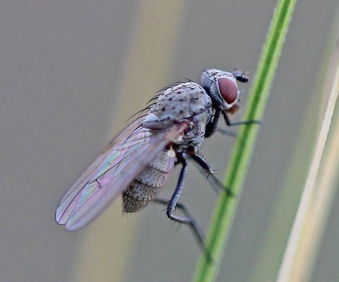 Обработка лука от луковой мухи нашатырным