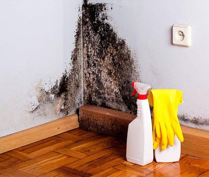 Препарат против плесени на стенах