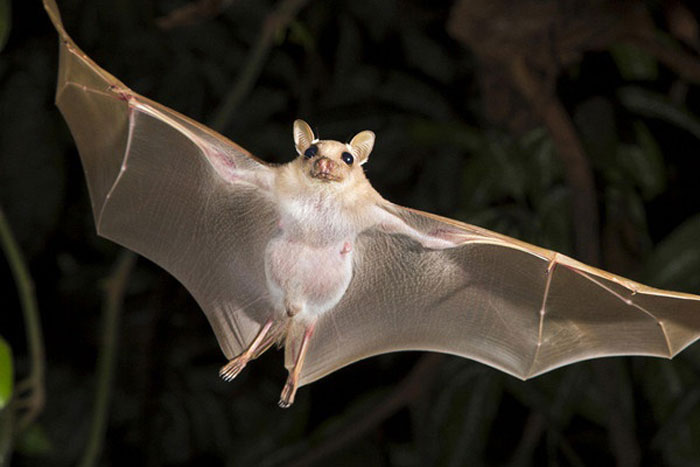 Чем опасны летучие мыши для человека. Где зимуют летучие мыши