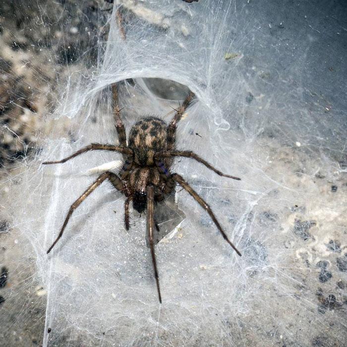 номера домовой паук фото разговорной речи