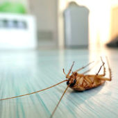 Резистентность тараканов: что это и почему происходит