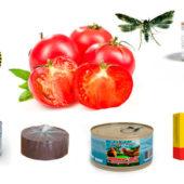 Сколько нужно дымовых шашек для выведения томатной моли из теплицы