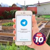 ТОП-10 телеграм-каналов на тему Сад Огород в 2021 году