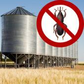 Как избавиться от долгоносика в зернохранилище