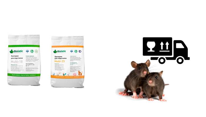 Уход грызунов из животноводческого помещения в результате применения бактерий «Biolatic»