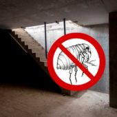 Чем можно потравить блох в подвале - концентраты, порошки, дымовые шашки