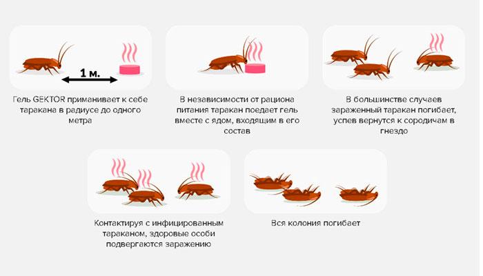 """Механизм действия геля от тараканов """"Гектор"""""""