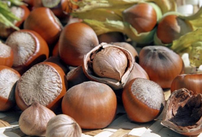 Орехи фундука